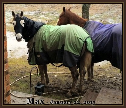Gelding, Horses of Texas, Tough1 Blanket